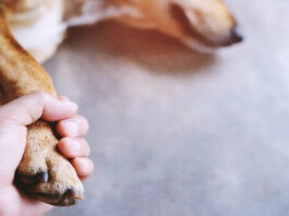 grief after losing a pet