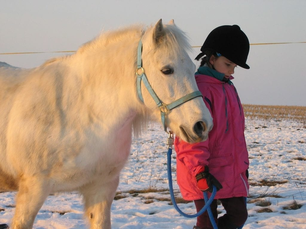 pony-922002_1280